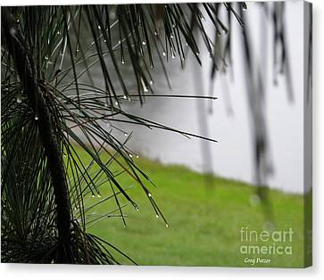 Canvas Print featuring the photograph Elements by Greg Patzer