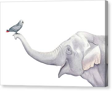 Elephant And Bird Watercolor Canvas Print by Taylan Apukovska