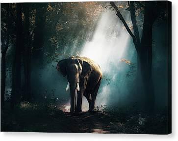 Elephant At Daybreak Canvas Print by Sasin Tipchai