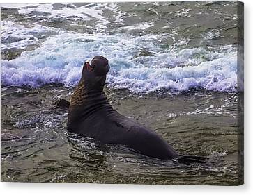 Elephant Seals Canvas Print - Elephant Bull Seal In Surf by Garry Gay