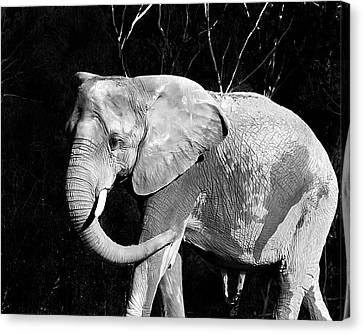Elephant Canvas Print by Camille Lopez