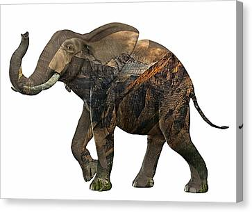 Elephant Collection Canvas Print by Marvin Blaine