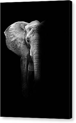 Pittsburgh Zoo Canvas Print - Elephant by Deborah Penland