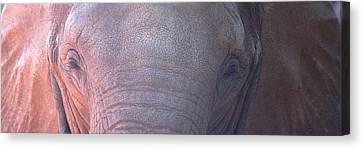 Elephant Ears Canvas Print by Greg Slocum