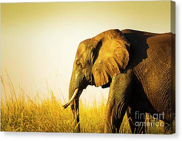 Elephant In Long Grass Canvas Print by Tim Hester