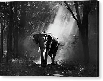 Sun Rays Canvas Print - Elephant In The Heat Of The Sun Black And White by Georgiana Romanovna