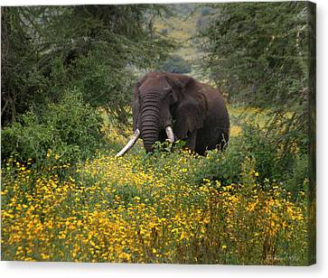 Elephant Of The Crater Canvas Print by Joseph G Holland