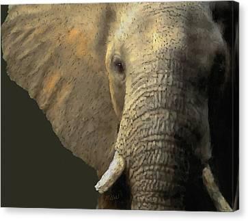 Elephant Portrait Canvas Print by Kathie Miller