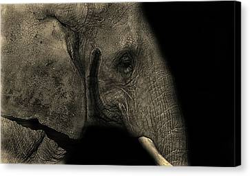 Elephant Portrait Canvas Print by Martin Newman