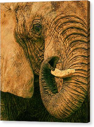Breathing Canvas Print - Elephant Study In Texture by Jack Zulli