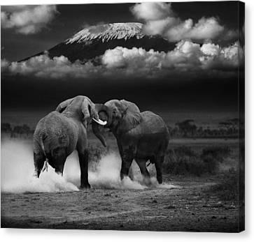 Elephant Tussle Canvas Print by Mike Gaudaur