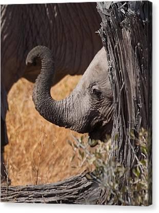 Elephants - Shy Baby Canvas Print by Nancy D Hall