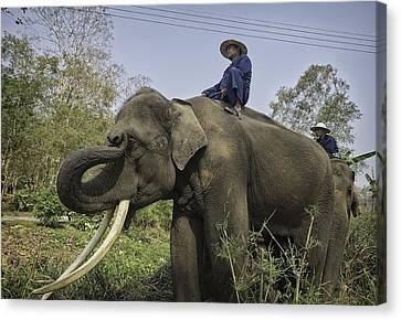 Day Canvas Print - Elephants And Umbrellas 6 by David Longstreath