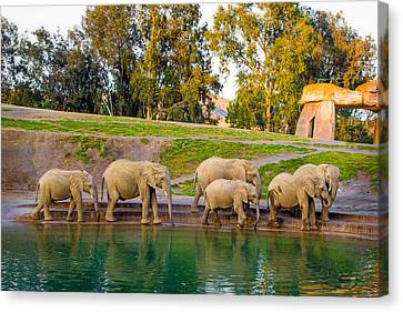 Canvas Print featuring the photograph Elephants Are Family by April Reppucci