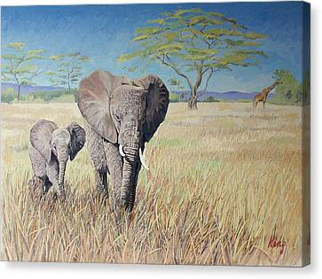 Elephants Canvas Print by Brian King