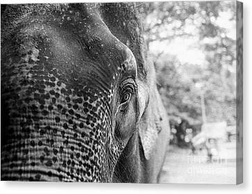 Canvas Print featuring the photograph Elephant's Eye by Dean Harte
