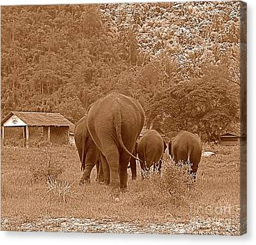 Elephants II Canvas Print by Louise Fahy