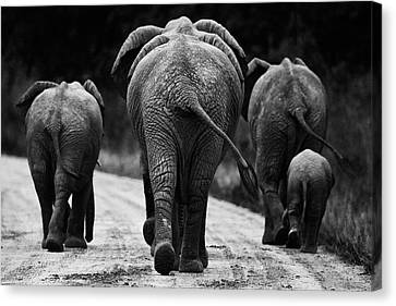 Africa Canvas Print - Elephants In Black And White by Johan Elzenga