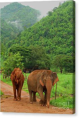 Canvas Print featuring the photograph Elephants by Louise Fahy