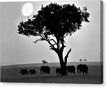 Elephants Under A Tree Canvas Print