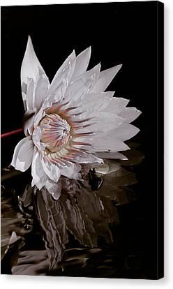 Elizabeth's Lily Canvas Print by Trish Tritz