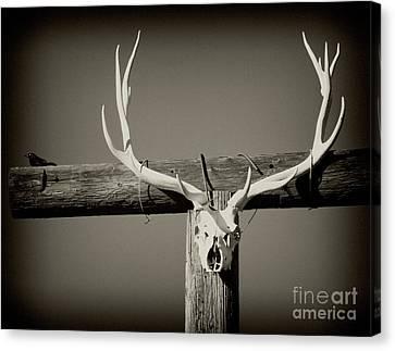 Elk And Blackbird Ranch Gate Canvas Print by Gus McCrea