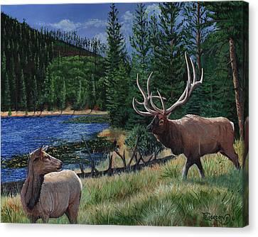 Elk At Beaver Lake  Yellowstone Canvas Print by Timithy L Gordon