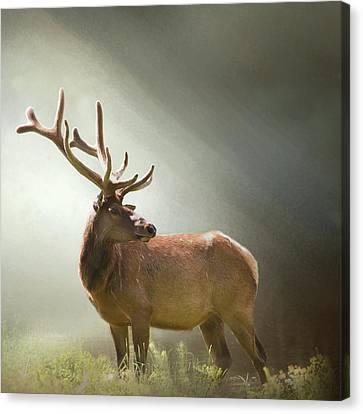 Canvas Print featuring the photograph Elk In Suns Rays by David and Carol Kelly