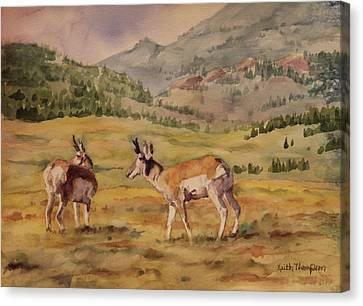 Pronghorn Antelope Canvas Print - Pronghorn Antelope In Yellowstone National Park by Keith Thompson