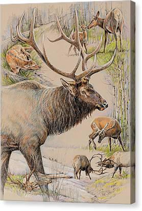 Elk Lifescape Canvas Print