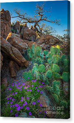 Elk Mountain Flowers Canvas Print