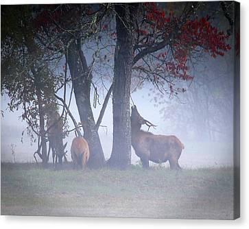 Elk Neck Scratch Canvas Print by Lamarre Labadie