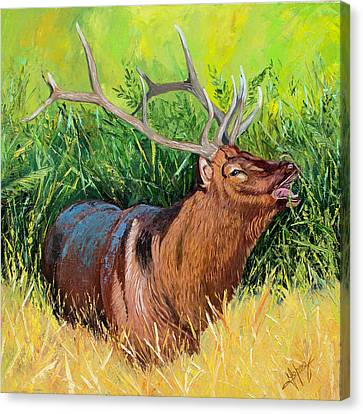Elk Original Oil Painting On 24x24x1 Inch Gallery Canvas Canvas Print