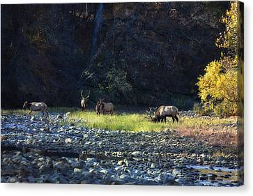 Canvas Print featuring the photograph Elk River Crossing At Sunrise by Michael Dougherty