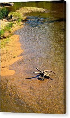 Elk River Driftwood Canvas Print