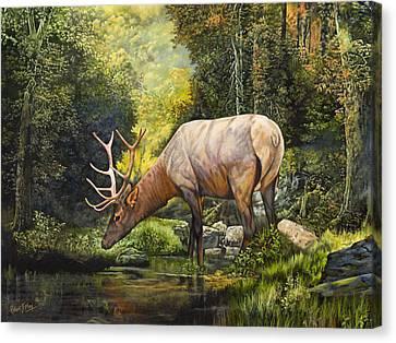 Elk Study Canvas Print by Robert May