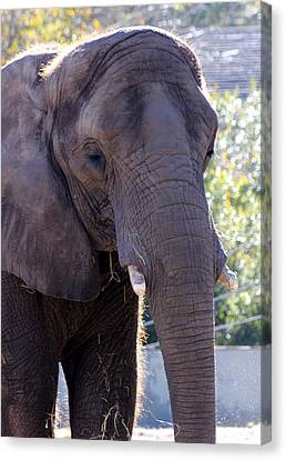 Ellie Canvas Print by Dana  Oliver