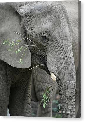 Elly At Lunch Canvas Print by Karol Livote