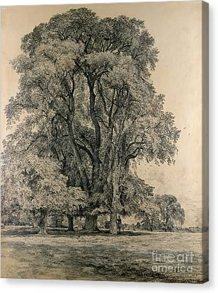 Elm Trees In Old Hall Park Canvas Print by John Constable