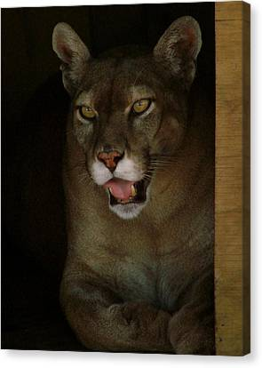 Elmira's Panther Canvas Print by Kimberly Camacho