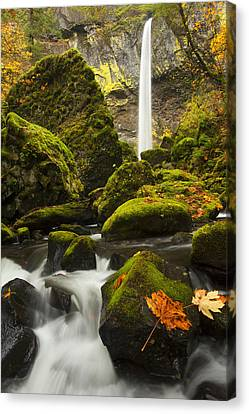 Elowah Autumn Canvas Print by Mike  Dawson