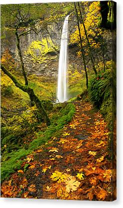 Autumn Leaf Canvas Print - Elowah Autumn Trail by Mike  Dawson