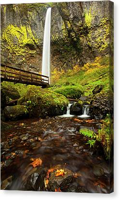Elowah Perspective Canvas Print by Mike  Dawson