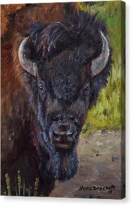 Elvis The Bison Canvas Print by Lori Brackett