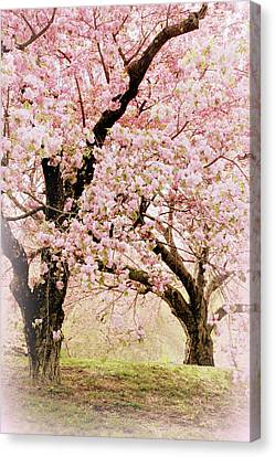 Cherry Tree Canvas Print - Embrace Of Spring by Jessica Jenney