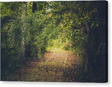 Embrace The Woods Canvas Print by Shane Holsclaw