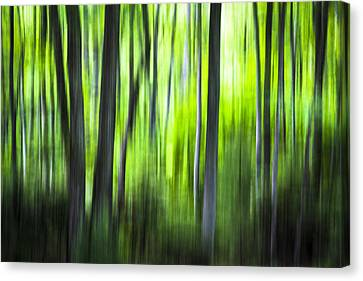 Green Forest - North Carolina Canvas Print
