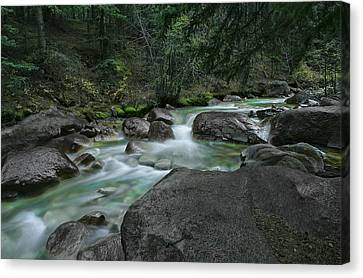 Canvas Print featuring the photograph Emerald Forest by Tim Reaves