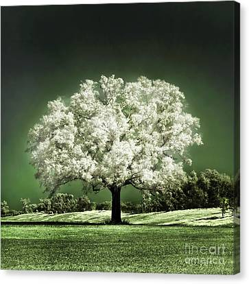 Emerald Meadow Square Canvas Print by Hugo Cruz