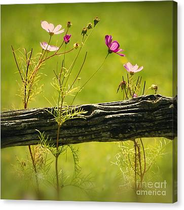 Emerging Beauties - 01-rgnl-sq Canvas Print